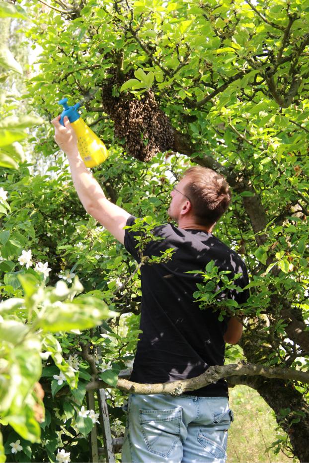 Bienen Imker sammeln